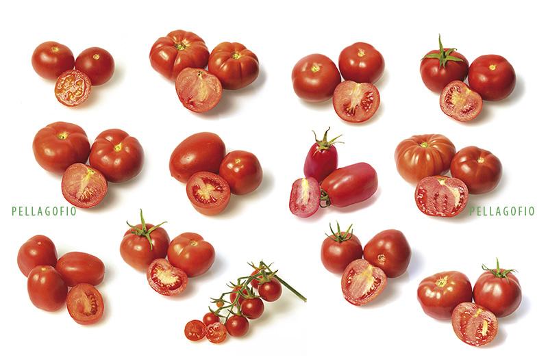 Variedades Tradicionales De Tomates De Canarias Pellagofio